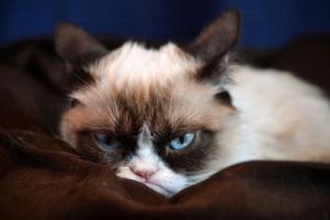 Причиной раздражения кота могут стать чужие запахи