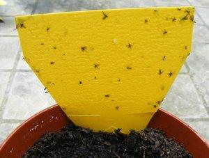 Средство от мошек дома - безвредно для растений