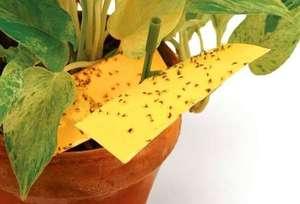 Мошка в земле растений