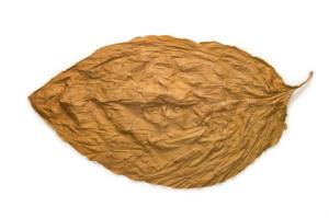 Сухие листья табака имеют свойство отпугивать моль