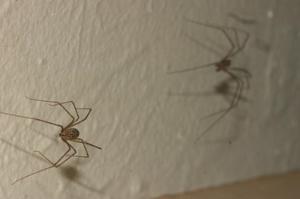 Как надо избавляться от пауков