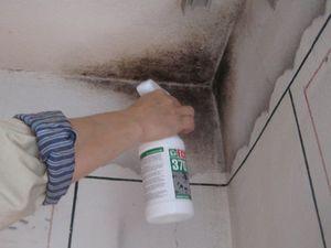 Эффективные средства для выведения плесени со стен квартиры