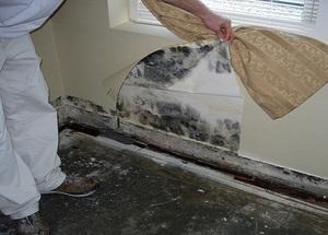 Особенности выведения плесени со стен в квартире