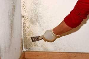 Описание способов самостоятельного удаления грибка со стен в квартире
