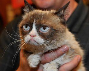 Тест: Какой вы знаменитый кот?