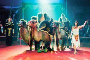 Тест: Кем бы вы работали в цирке?
