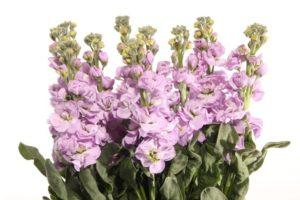 Тест: Угадайте, где лишний цветок