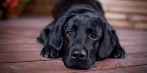 Тест: Отгадайте сложные собачьи породы