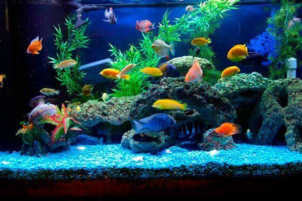 Оборудуем домашний аквариум
